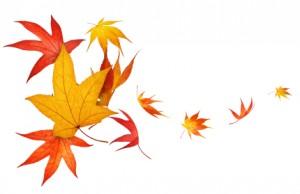 iStock_autumn leaves